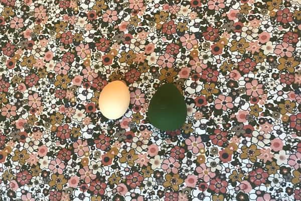 Maude drop next to a chicken egg